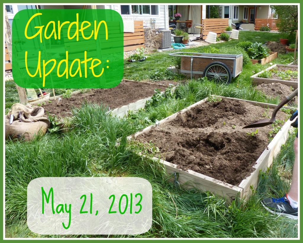 Garden Update May 21 2013